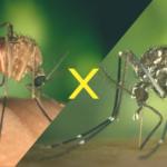 Como identificar o mosquito da Dengue?